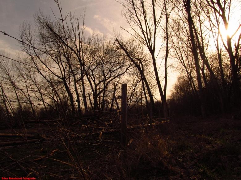 Hobokense Polder - Ik was aan wandelen met mijn lief in de hobokense polder en toen kwam ik bij paarden. ik zag deze plaats en ik wou het direct fotog