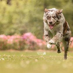Running Qi'ra