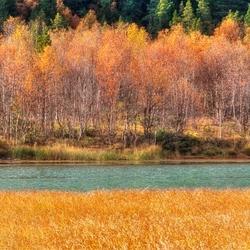 Berkenbos in herfstkleuren