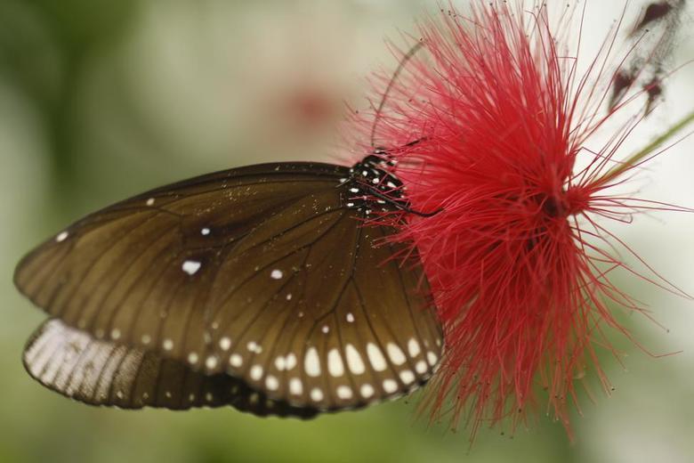 Vlinder - Geen idee welke vlinder dit is maar ik vondt het een geslaagd plaatje geworden!