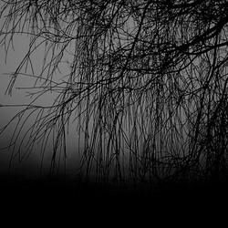 Misty morning ....