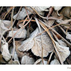 winterse vrouwenmantel