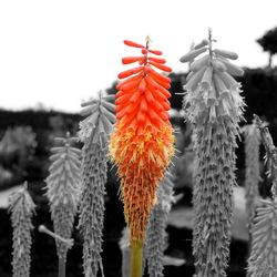 gekleurde bloem