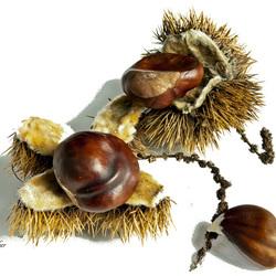 Trio nuts