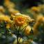 Rozen in bloei in Kasteeltuinen Arcen