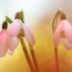 Bijna lente