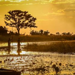 Traditionele Mokoro's in de Okavango Delta