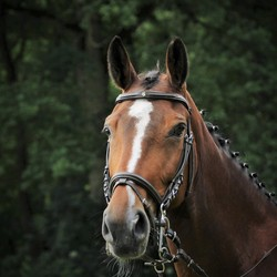 Tevreden paard.