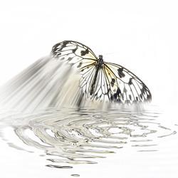 een vlinder......................