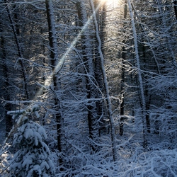 winter paradijs 2