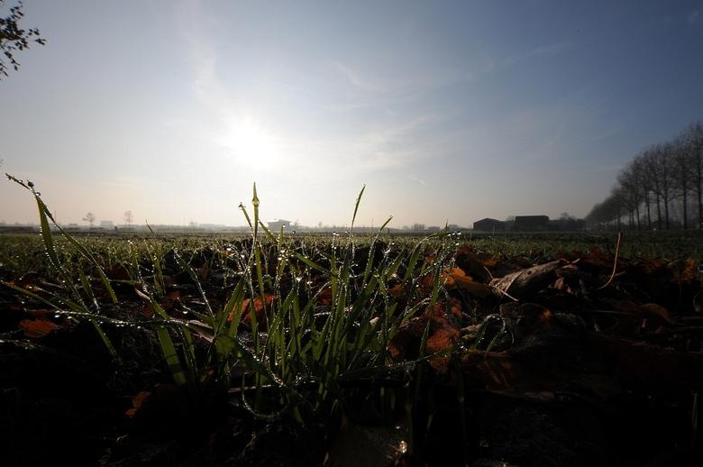 In De Morgen - Gister even de groothoek op de D300s,<br /> Even testen he ...Er was veel dauw op de Winter Tarwe.