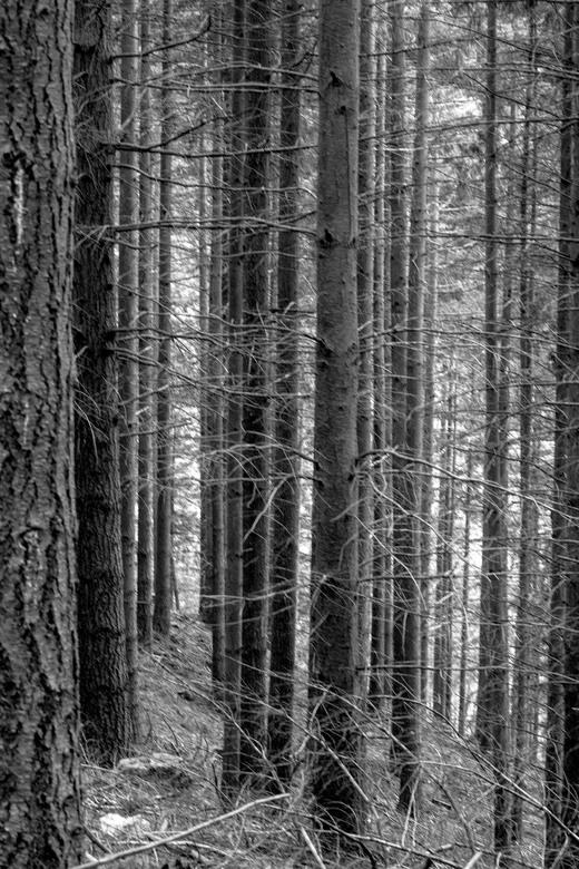 Wald - Duits woud
