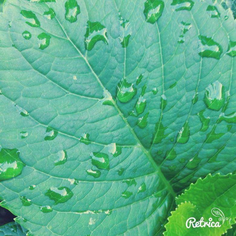 Regen  - image.jpg