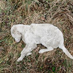 stervende hond