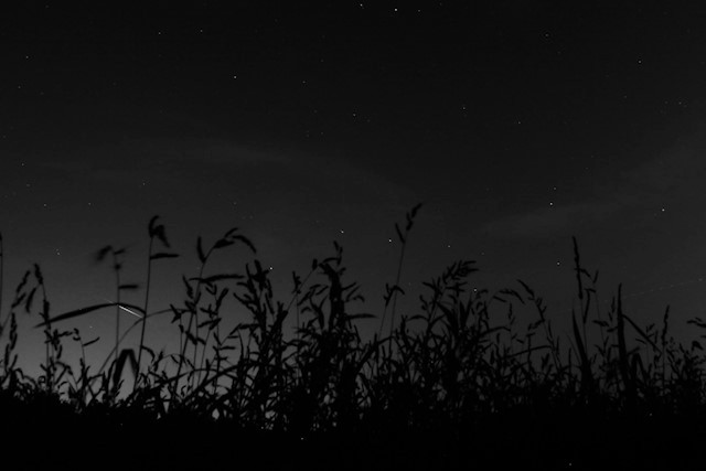 IMG_2268_1 Perseïden faling stars night