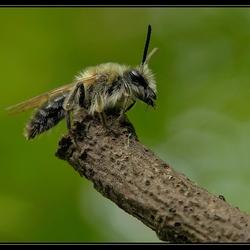 Little Bee in the Dark