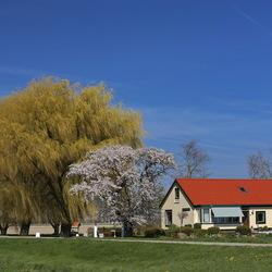 Voorjaar in de polder