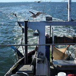Garnalenvissen op Texel