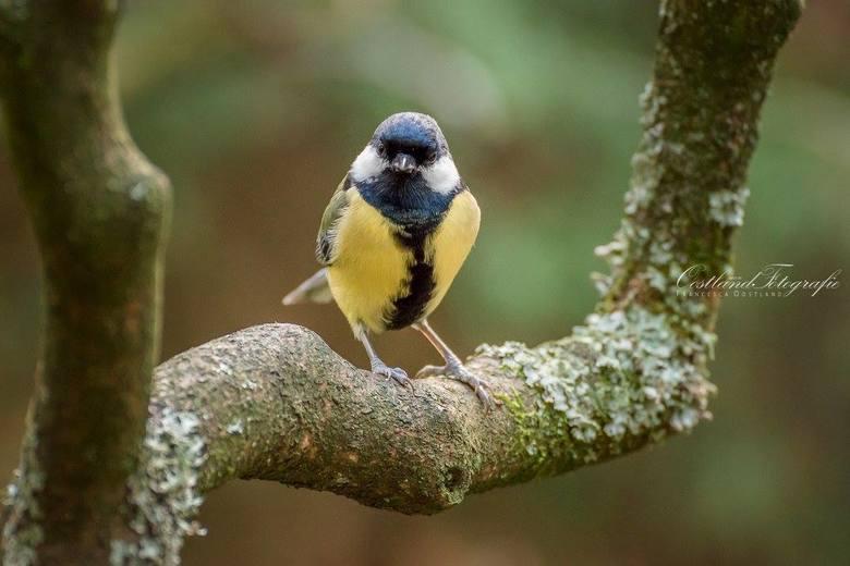 Nieuwsgierig  - Dit vogeltje kwam even kijken bij het bankje waar we zaten