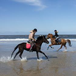 paardjes in galop