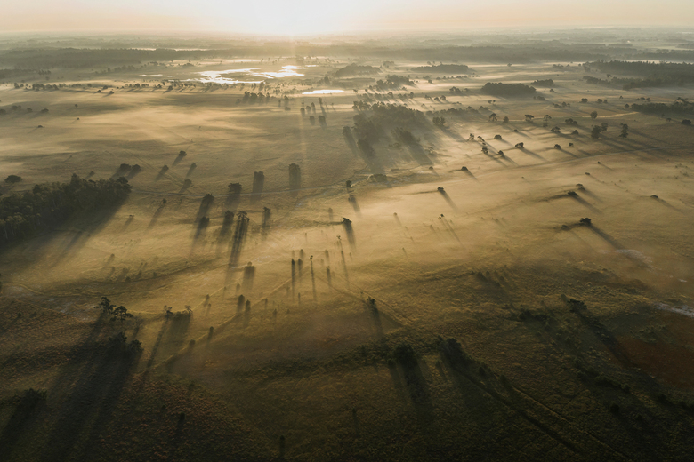 Field of Shadows -