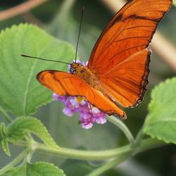 Blijdorp, Vlindertuin