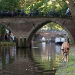 Wandelen langs de grachten van Utrecht