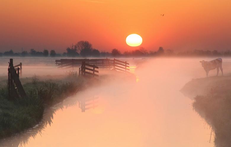 Mistige ochtend - een mistige ochtend in de polder