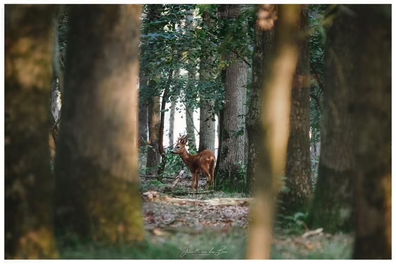 My hiding place - Al wandelend op de hei hoorde ik hem blaffen, wat stond hij daar mooi verstopt in zijn bos!