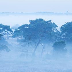 Het geheim van de Kalmthoutse Heide