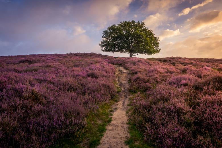 Purple Hill -