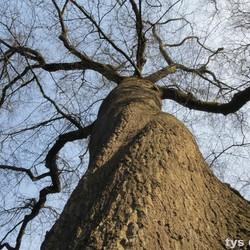 ander kijk op een boom tys damhuis  (36)