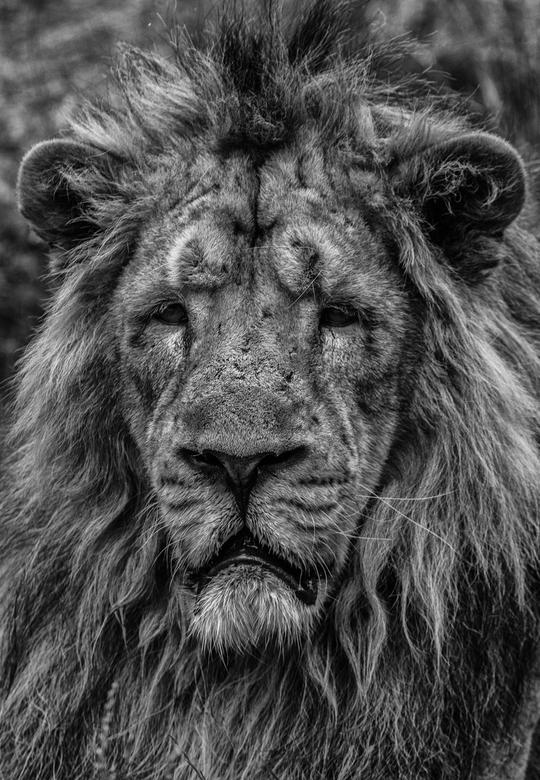 Sad King