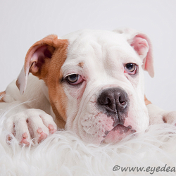 Tyson - de Old English BD II