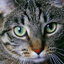 Ocean eye cat