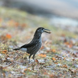beroemde vogel van Wageningen