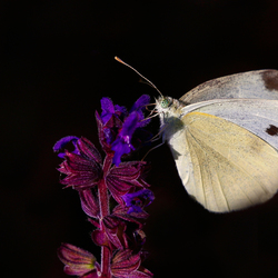 butterfly_67A2587