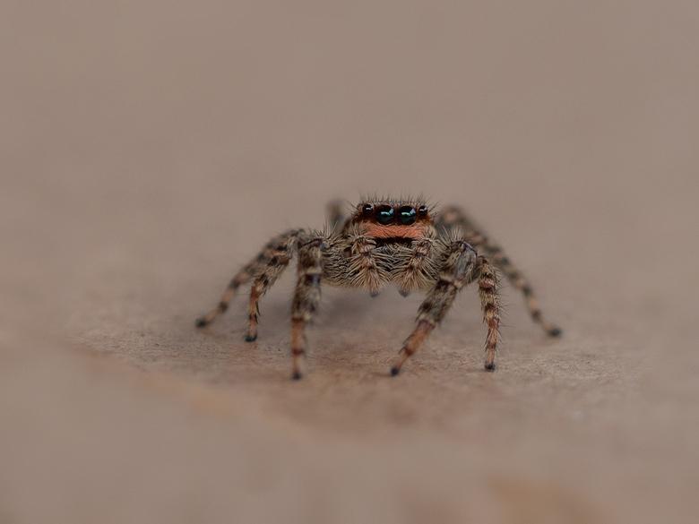 spiderman ? - Dit spinnetje zat heerlijk bij ons binnen, toch maar even buiten gezet !