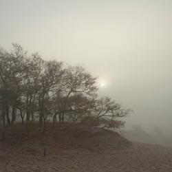 Mistige duinen 2