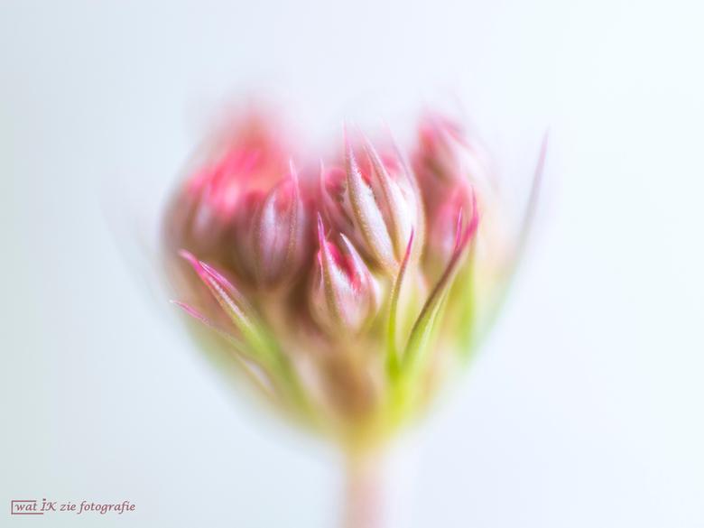 The beauty of a flower bud - Alweer een poosje weggeweest. Helaas ben ik op mijn verjaardag vorige maand niet lekker geworden, gevallen en dat leidde