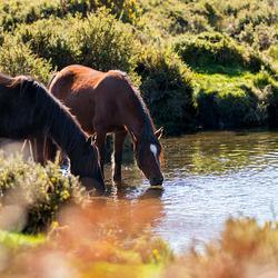 HPE Fotoreis Portugal - Paarden