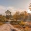 Brunssummerheide herfst
