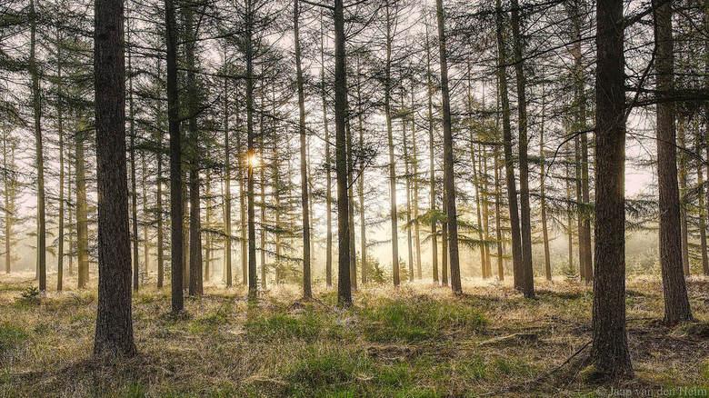 Forest Sunrise  -