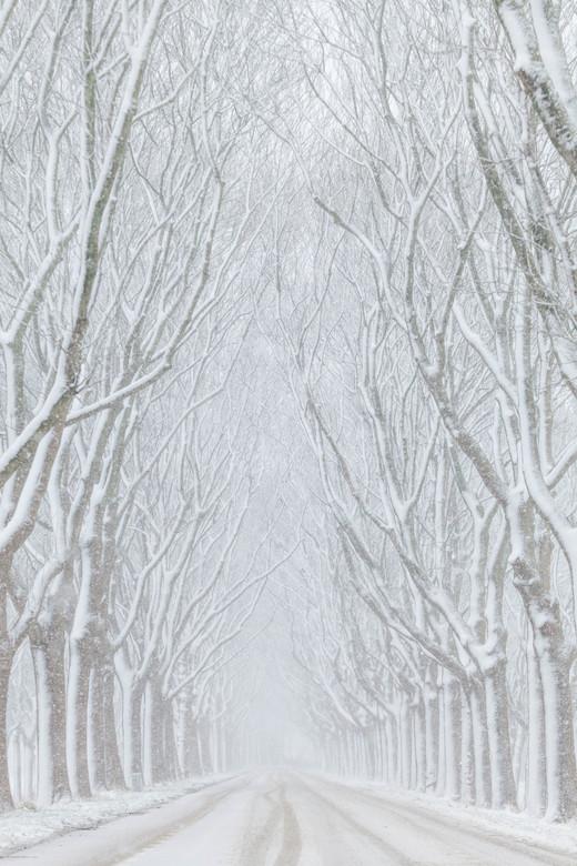 Winter werg
