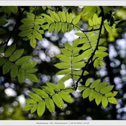 Licht en bladeren....