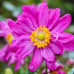 Dauw op een bloem