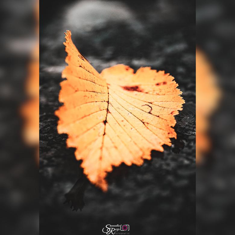 Laatste stukje herfst  -