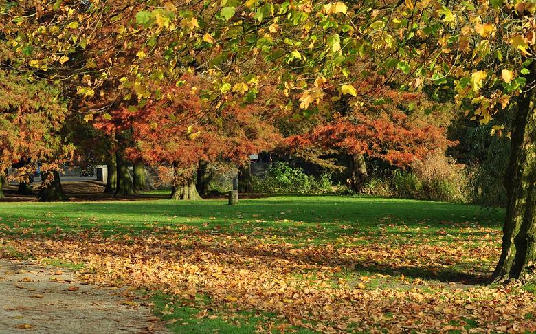 gevallen - Toch wat rode kleuren ook in het park. In de achtergrond een soort naaldboom die ook verkleurt en naalden verliest. Ik vergeet altijd hoe d