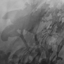 Shadows on the wall II