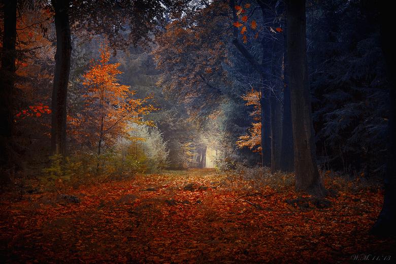 &quot;Autumn impression&quot; - Deze foto heb ik gemaakt op de Veluwe, een paar weken terug.<br /> <br /> Groetjes, Wil